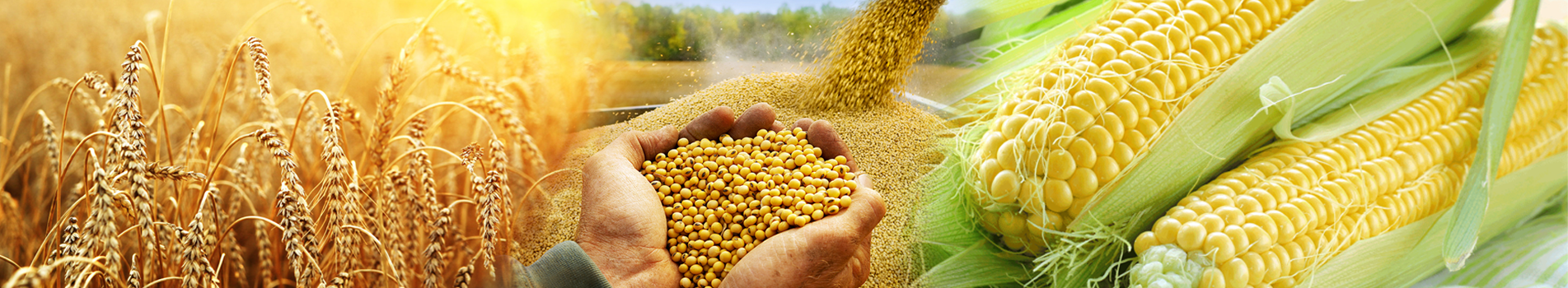 Agro Commodities Trading company | Agricultural Product Commodity